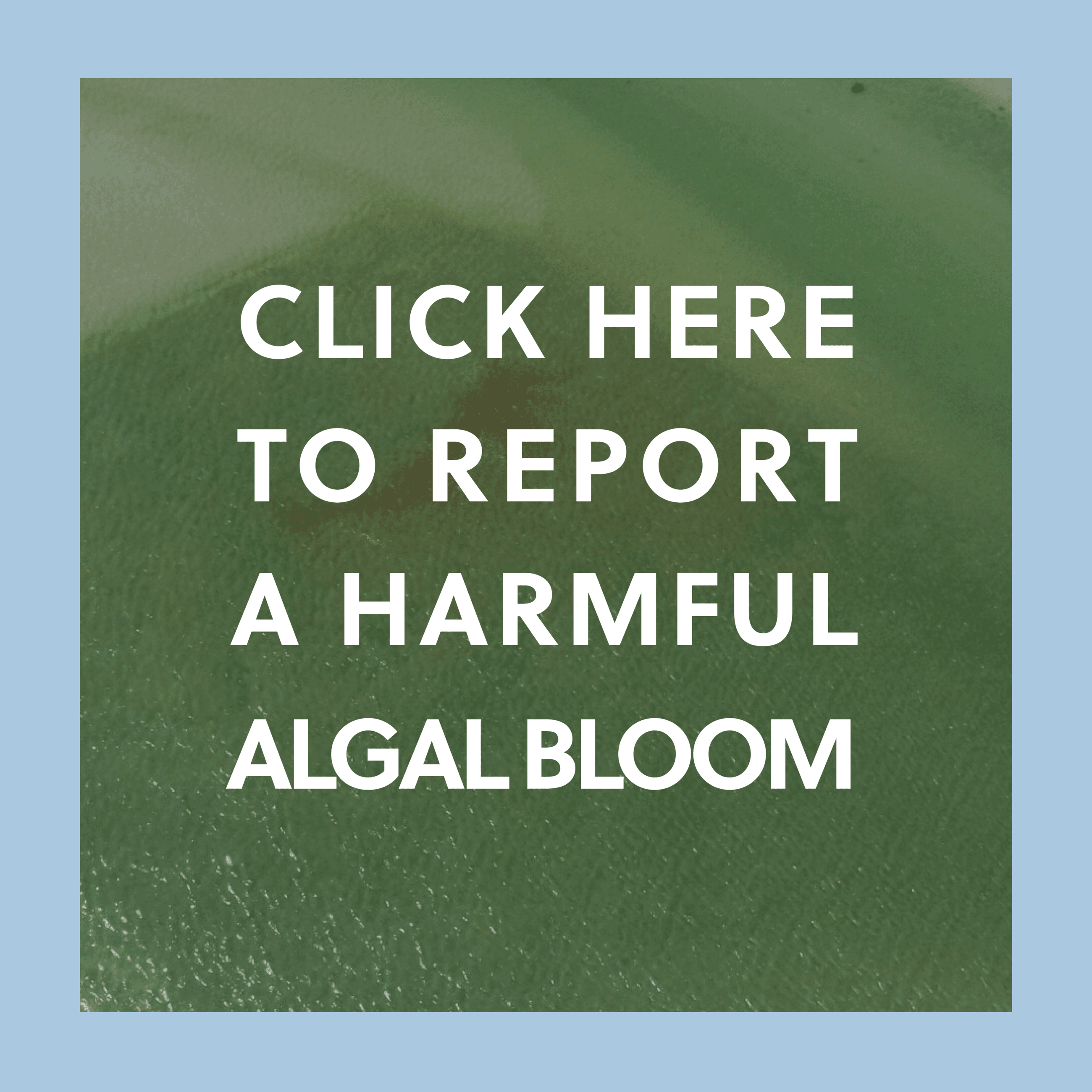 Harmful Algal Blooms Monitoring Program